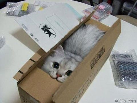 cat-smaller-box
