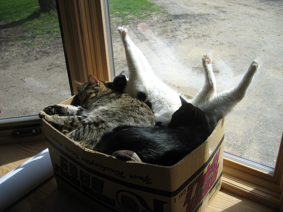 Cats Moving