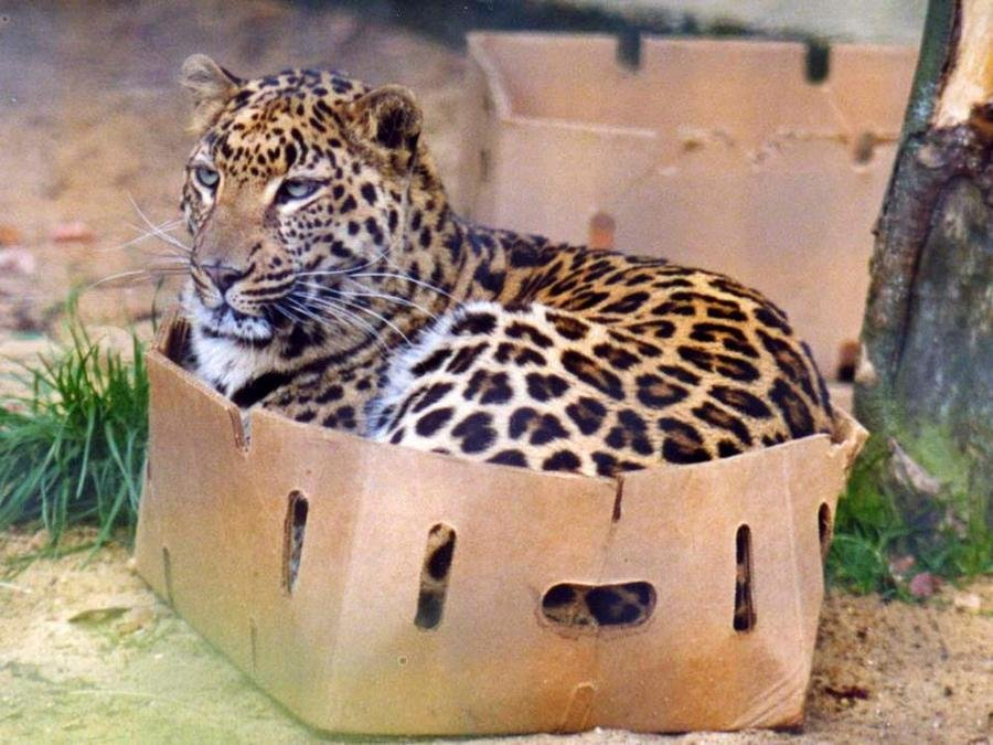 Packing With Cats - If I Fits I Sits - Few Moves Moving ...